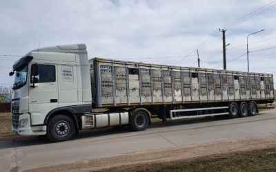 Перевозка животных и скота 8-965-920-08-80 - Архангельск, цены, предложения специалистов